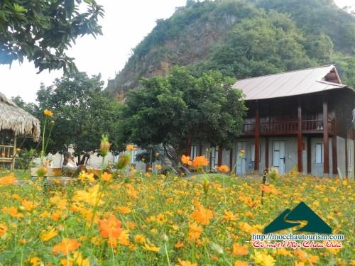5 nhà sàn đẹp tại  thị trấn Nông trường Mộc Châu