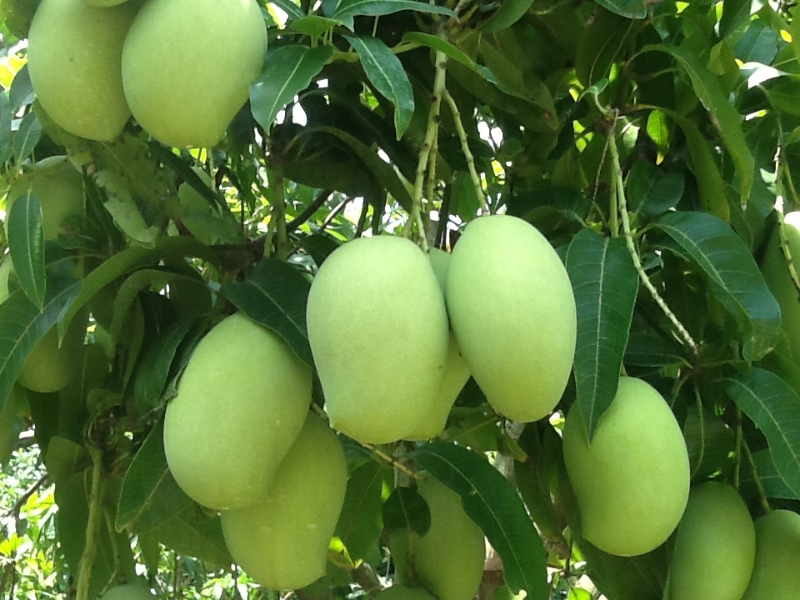 Hoa quả Mộc Châu