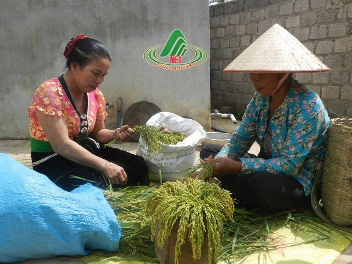 com nguoi thai (2)