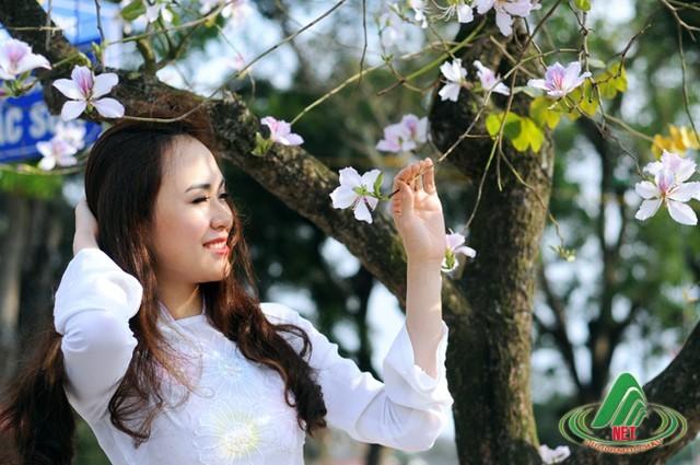 Những 'mùa hoa' ban trắng đẹp nhất Việt Nam