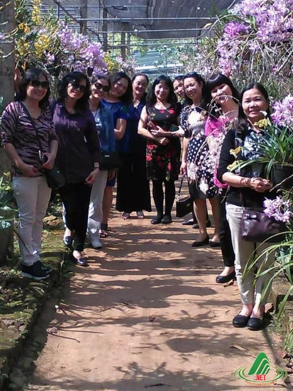 Hoa lan rừng đua nhau khoe sắc trên cao nguyên Mộc Châu