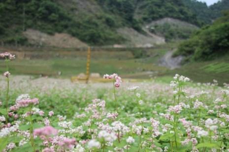 Say lòng hoa tam giác mạch cuối mùa xứ Tây Bắc - ảnh 9