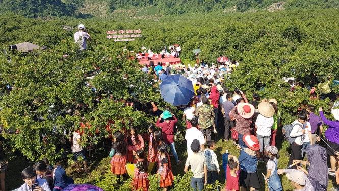 Lên Mộc Châu hòa vào lễ hội hái mận