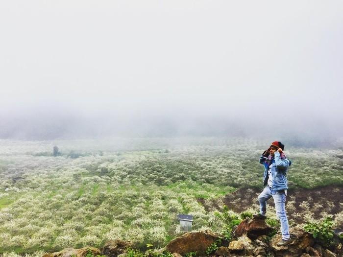 Nhìn xuống thung lũng hoa mận - Ảnh: huyvespa