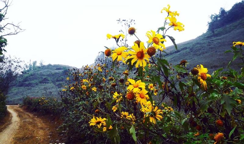 Kinh nghiệm phượt Mộc Châu: Bản Ba Phách đẹp tựa thiên đường