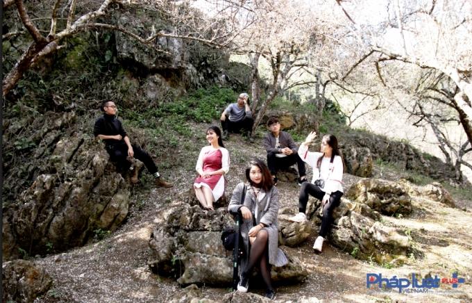 Nhiều đoàn du lịch đã đến Mộc Châu những ngày này để hòa mình vào những rừng hoa mận, hoa mơ nở trắng rừng.