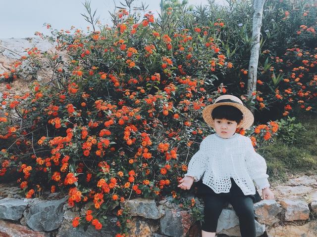 '''''Phượt thủ nhí đáng yêu bên sắc cam của hoa ngũ sắc'''''