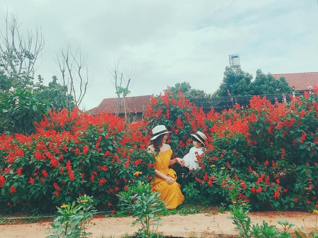 '''''Họ ngọt ngào bên sắc đỏ của hoa xác pháo'''''