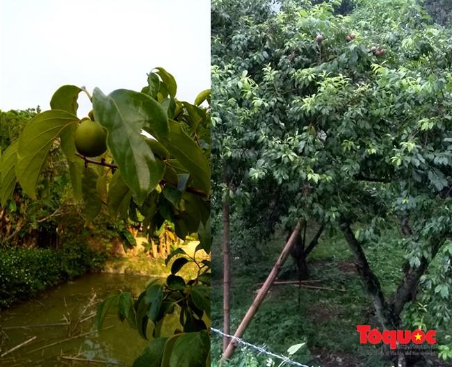Khám phá 'Thiên đường' tránh nóng chỉ cách Hà Nội 180km - ảnh 6