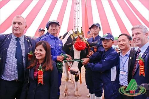 Cuộc thi Hoa hậu bò sữa được tổ chức vào 15/10 hằng năm