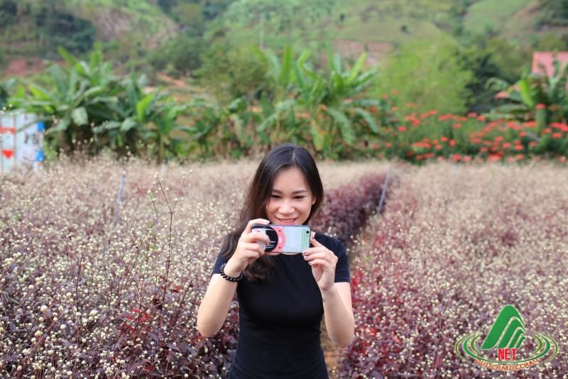 tết dương Mộc Châu (34)