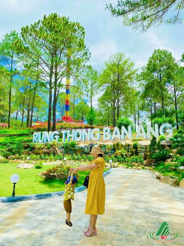 rung thong ban ang moc chau (14)