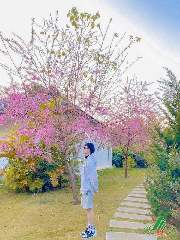 san may hang kia (3) (Copy)