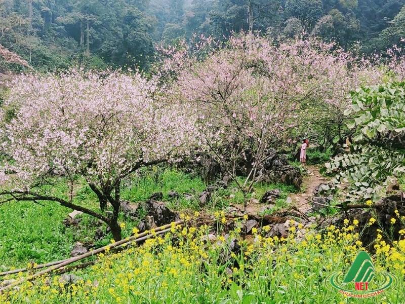 hoa dao long luong van ho (12)